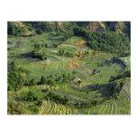 Asia, China, Yunnan, Yuanyang. Pattern of green 2 Postcard