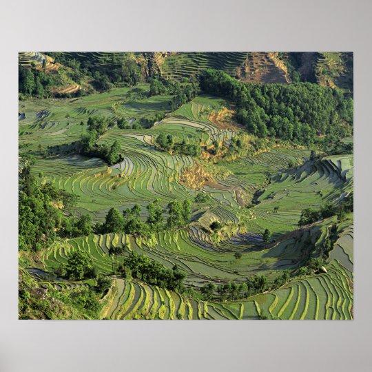 Asia, China, Yunnan, Yuanyang. Pattern of green 2 Poster