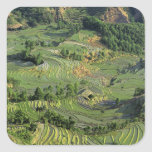 Asia, China, Yunnan, Yuanyang. Pattern of green 2 Sticker