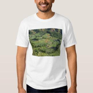 Asia, China, Yunnan, Yuanyang. Pattern of green 2 T-Shirt