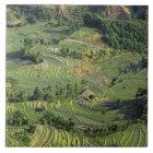 Asia, China, Yunnan, Yuanyang. Pattern of green 2 Tile