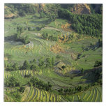 Asia, China, Yunnan, Yuanyang. Pattern of green 2 Ceramic Tile
