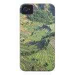 Asia, China, Yunnan, Yuanyang. Pattern of green iPhone 4 Cover