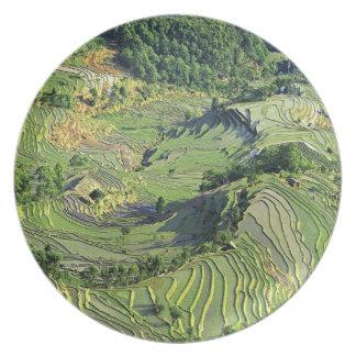 Asia, China, Yunnan, Yuanyang. Pattern of green Melamine Plate
