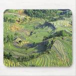 Asia, China, Yunnan, Yuanyang. Pattern of green Mouse Pad