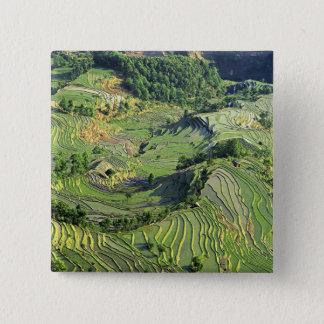 Asia, China, Yunnan, Yuanyang. Pattern of green Pinback Button