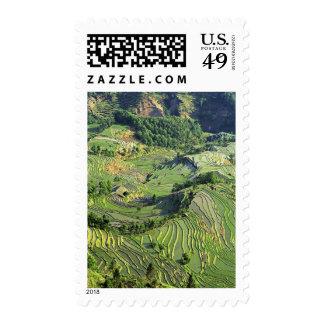 Asia, China, Yunnan, Yuanyang. Pattern of green Stamp