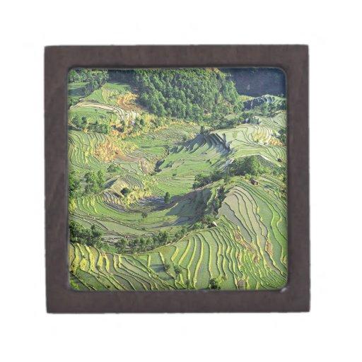 Asia, China, Yunnan, Yuanyang. Pattern of green Premium Keepsake Box