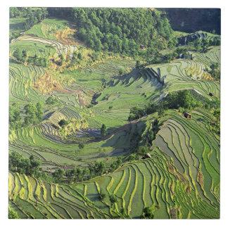 Asia, China, Yunnan, Yuanyang. Pattern of green Tile
