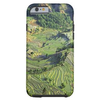 Asia, China, Yunnan, Yuanyang. Pattern of green Tough iPhone 6 Case