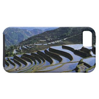 Asia, China, Yunnan, Yuanyang. Rugoso iPhone 5 Funda