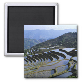 Asia, China, Yunnan, Yuanyang. Rugoso Imán Cuadrado