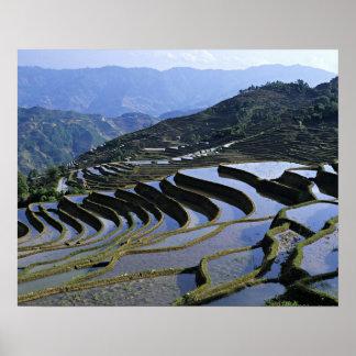 Asia, China, Yunnan, Yuanyang. Rugoso Póster
