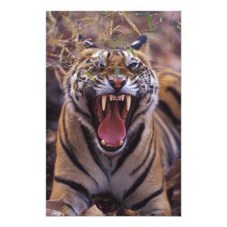 Asia, India, Bandhavagarth National Park, A Photo