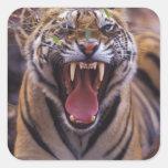 Asia, India, Bandhavagarth National Park, A Square Sticker