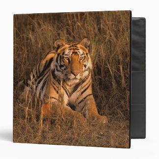 Asia, India, Bandhavgarh National Park. Tiger 3 Ring Binder