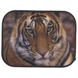 Asia, India, Bandhavgarth National Park, Car Floor Mat