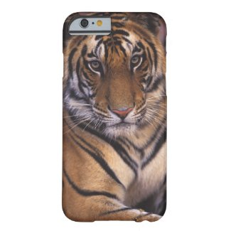 Asia, India, Bandhavgarth National Park, Barely There iPhone 6 Case