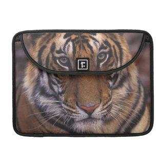 Asia, India, Bandhavgarth National Park, Sleeves For MacBooks
