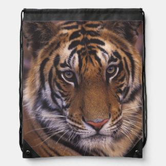 Asia, India, Bandhavgarth National Park, Drawstring Backpack