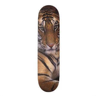 Asia, India, Bandhavgarth National Park, Skateboard Deck