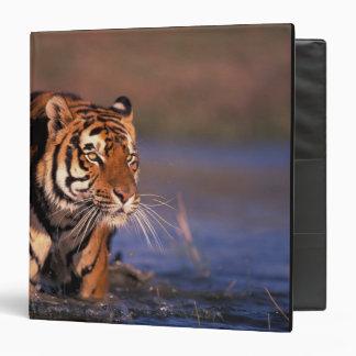 Asia, India, Bengal tiger Panthera tigris); Vinyl Binders
