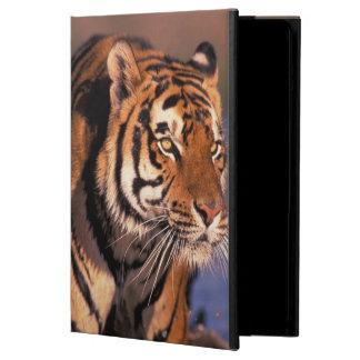 Asia, India, Bengal tiger Panthera tigris); Case For iPad Air