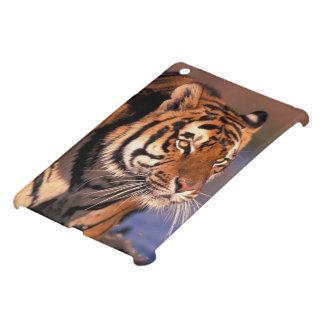 Asia, India, Bengal tiger Panthera tigris); Case For The iPad Mini
