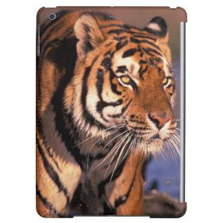 Asia, India, Bengal tiger Panthera tigris); iPad Air Case