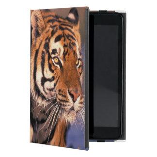 Asia, India, Bengal tiger Panthera tigris); iPad Mini Cover