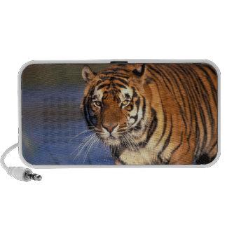 ASIA, India, Bengal Tiger Panthera tigris) Mini Speaker