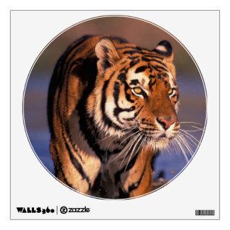 Asia, India, Bengal tiger Panthera tigris); Wall Sticker