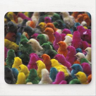 Asia, India, Karnataka, Mysore. Colored chicks Mouse Pad
