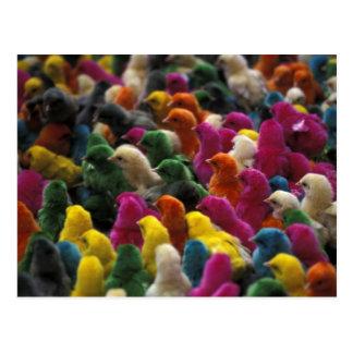 Asia, India, Karnataka, Mysore. Colored chicks Post Card
