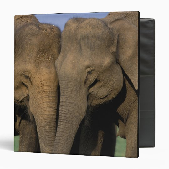 Asia, India, Nargahole National Park. Indian 2 Binder