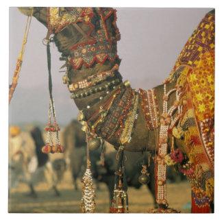 Asia, India, Pushkar. Camel Shamu , Pushkar Large Square Tile