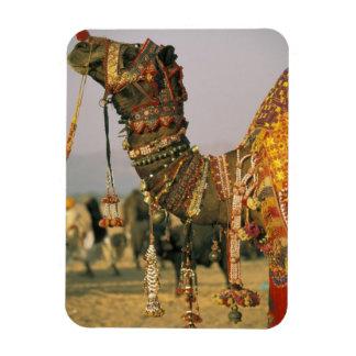 Asia India Pushkar Camel Shamu Pushkar Rectangular Magnets