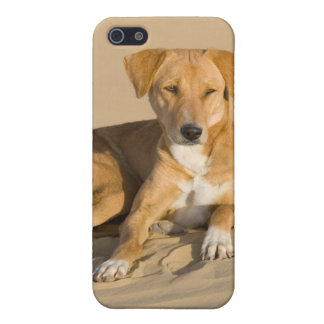 Asia, India, Rajasthan, Jaisalmer, Thar Cover For iPhone SE/5/5s