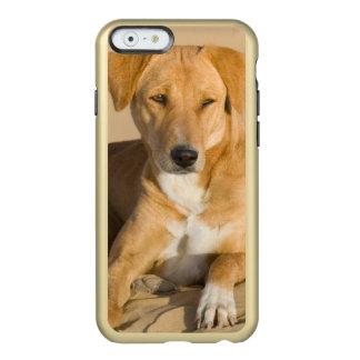 Asia, India, Rajasthan, Jaisalmer, Thar Incipio Feather Shine iPhone 6 Case