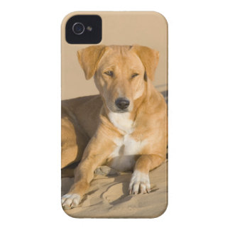 Asia, India, Rajasthan, Jaisalmer, Thar iPhone 4 Case-Mate Case