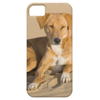 Asia, India, Rajasthan, Jaisalmer, Thar iPhone SE/5/5s Case