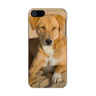 Asia, India, Rajasthan, Jaisalmer, Thar Metallic Phone Case For iPhone SE/5/5s