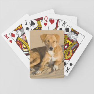 Asia, India, Rajasthan, Jaisalmer, Thar Poker Deck