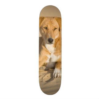 Asia, India, Rajasthan, Jaisalmer, Thar Skateboard