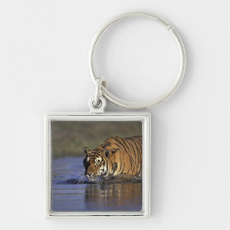 ASIA, India Tiger walking through the water 2 Keychain