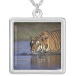 ASIA, India Tiger walking through the water 2 Square Pendant Necklace