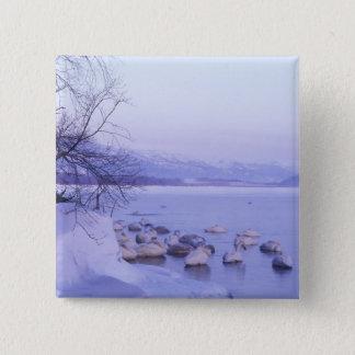 Asia, Japan, Hokkaido, Akan NP, Whopper Swans Button