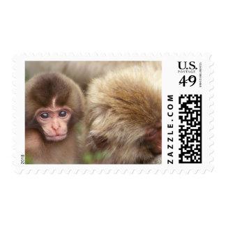 Asia, Japan, Nagano, Jigokudani, Snow Monkey 2 Postage Stamp