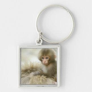 Asia, Japan, Nagano, Jigokudani, Snow Monkey 3 Keychains