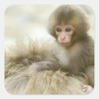 Asia, Japan, Nagano, Jigokudani, Snow Monkey 3 Square Sticker